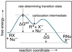 "An image of a graph that has a label of ""reaction coordinate"" on the x-axis, and ""free energy"" on the y-axis. The line has two curves the first curve to the middle has a label of ""delta G act"" and a label of ""rate determining transition state"". The trough on the curve is labeled as ""carbonation intermediate."""