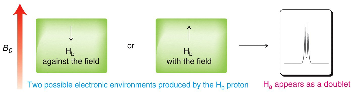 An image of two possible electronic environments produced by Hb proton.
