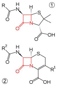 An image of four membered amide ring and cephalosporin.