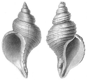An image of two shells.
