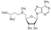An image of a common methylating agent in S-adenosylmethioninine.