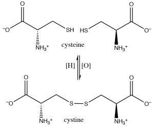An image of disulfide crosslinks between cysteine moieties.