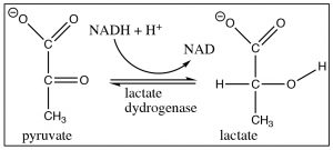 An image of a reaction of lactate dydrogenase.