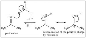 An image a reaction of the carbonyl oxygen the resultant positive charge.