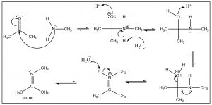 An image of reactions of oxygen nucleophiles and nitrogen nucleophiles.