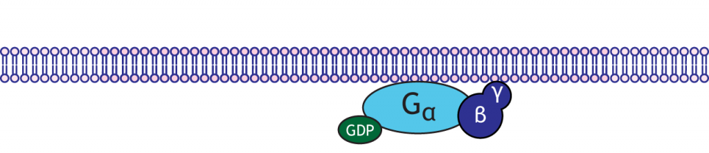 Illustrated G-protein. Details in caption.