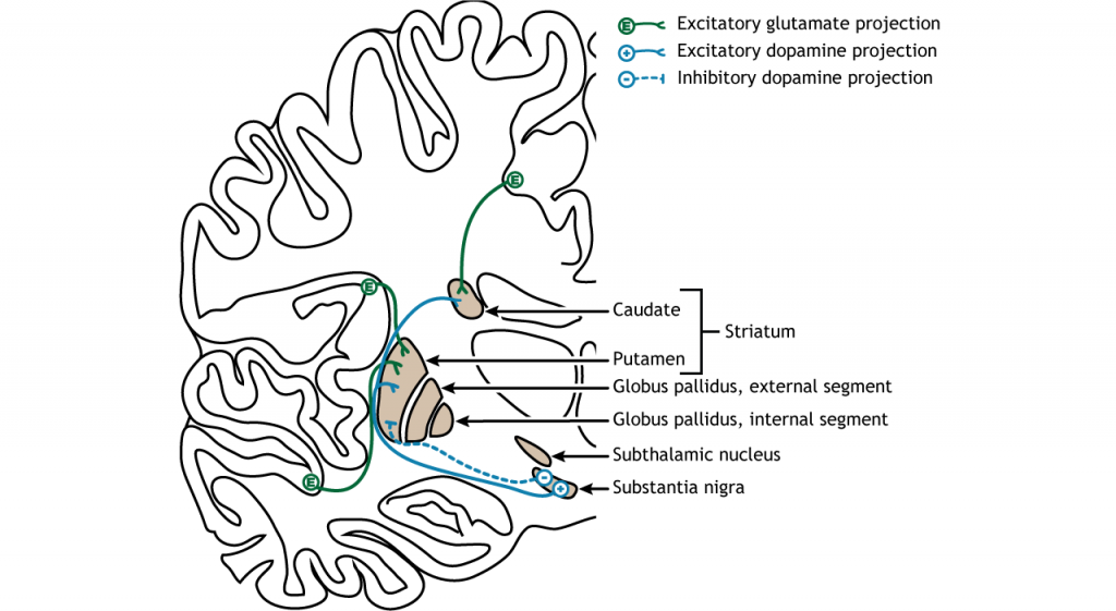 Illustration of input to the basal ganglia. Details in caption and text.