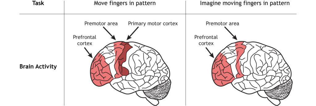Illustration of brain activity in response to either moving fingers or imagining moving the fingers. Details in caption and text.