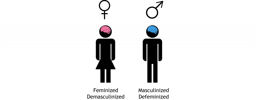 Female and male icons with pink and blue brains, respectively.