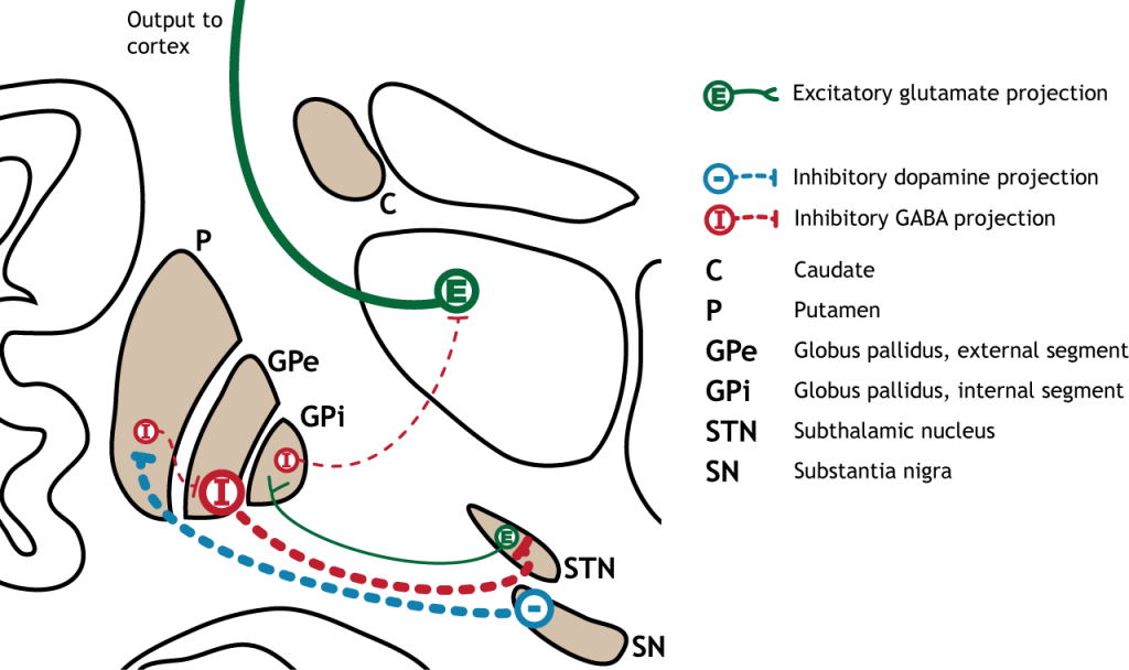 Illustration of synaptic changes in the indirect pathway as a result of inhibition from the substantia nigra. Details in caption and text.