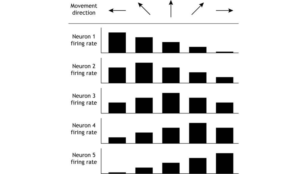 Illustration of neuron firing rates in response to movement in different directions. Details in caption.