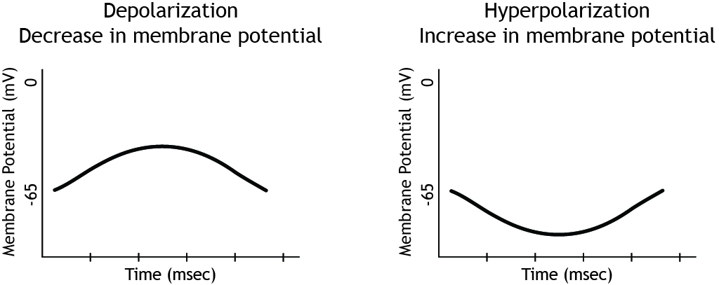 Two membrane potential graphs showing changes in potential. Details in caption.