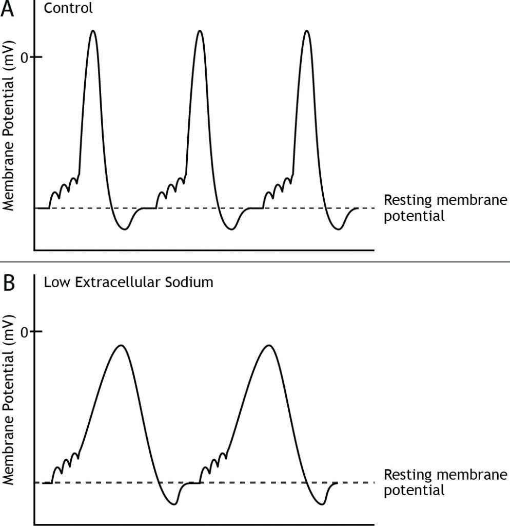 Graphs showing action potentials in control and low extracellular sodium environments. Details in caption.