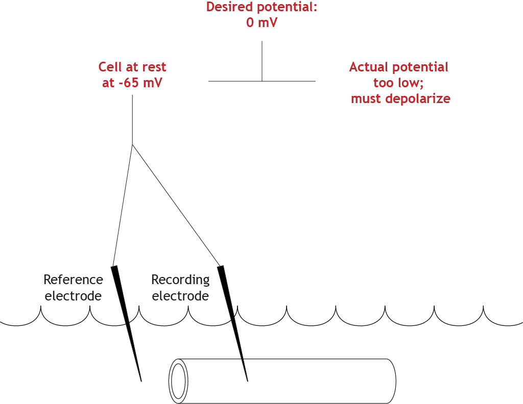 Illustrated voltage clamp experiment comparing actual and set membrane potential values. Details in caption.