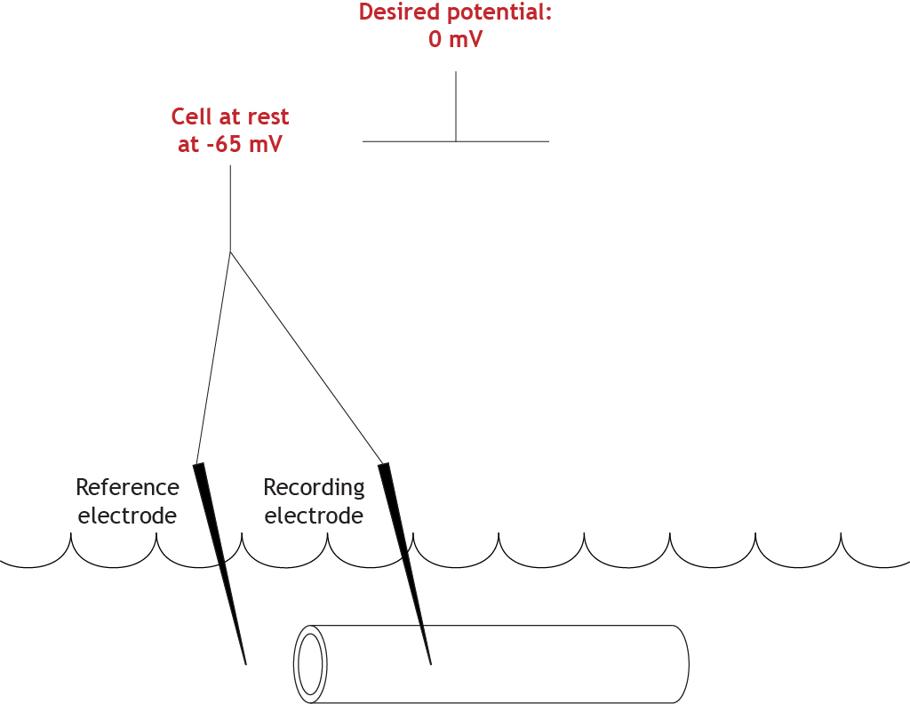 Illustrated voltage clamp experiment with a set clamped value of 0 mV. Details in caption.