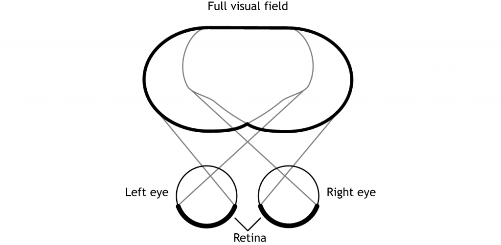 Illustration of the full visual field. Details in caption.