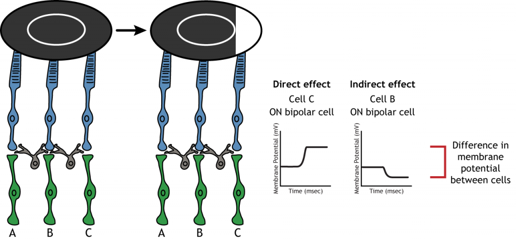 Illustration showing enhancement of signal by lateral inhibition. Details in caption.