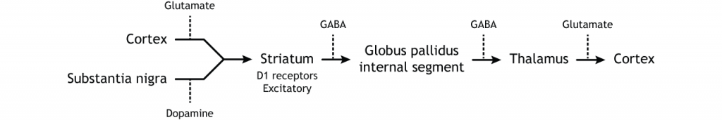 Illustration of direct pathway within the basal ganglia. Details in caption.