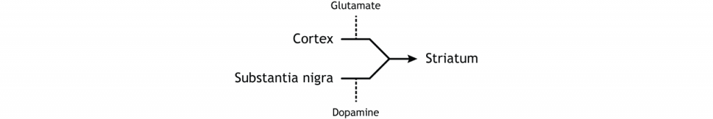 Illustration of input to the basal ganglia. Details in caption.