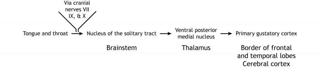 Taste pathway in text. Details in caption.
