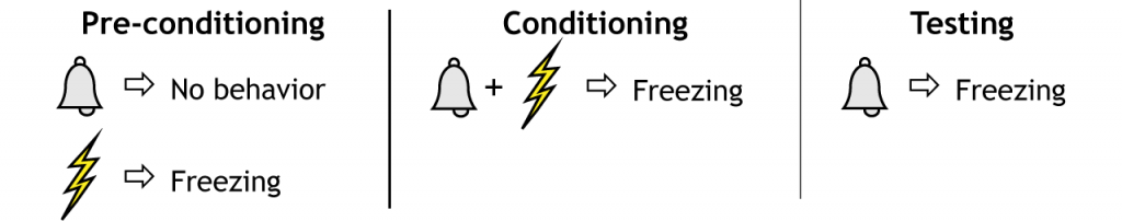 Illustration of the fear conditioning paradigm. Details in text and caption.