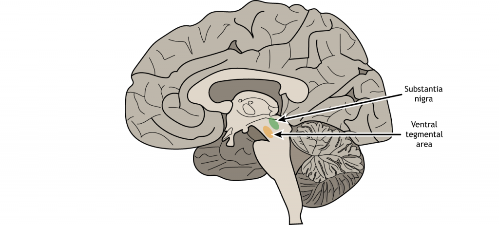 Illustration of a sagittal section of the brain showing the ventral tegmental area and substantia nigra. Details in text and caption.