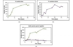 Three graphs: P. aurelia growing alone successfully (population grew to 250 cells after 10 days and then leveled off), P. caudatum growing alone successfully (population grew to 70 cells in 10 days and stabilized), and both species growing together in which P. aurelia grows successfully (grew to 230 in 14 days and stabilized) and P. caudatum only grows to 20 cells and dies about after 15 days.