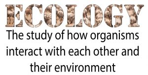 Ecology: The study of how organisms interact with each other and their environment.