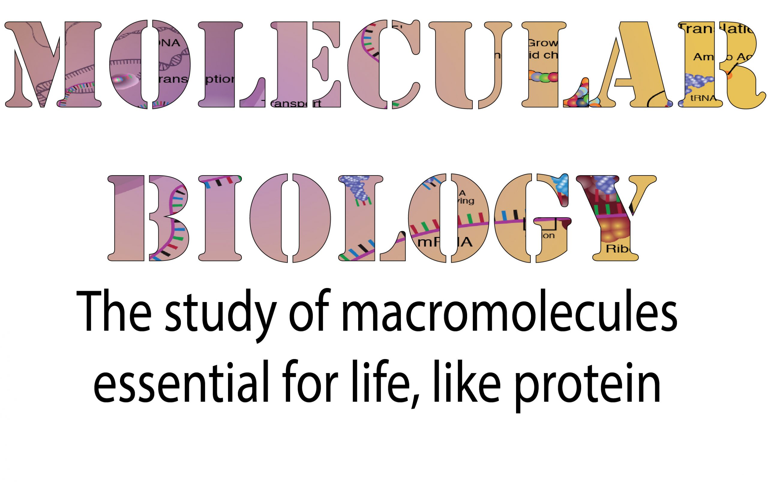 Molecular biology is the study of macromolecules essential for life, like protein
